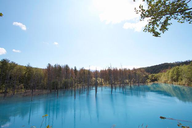 青い池全景