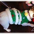 Photos: クリスマススタイル