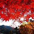 Photos: 『照秋。。。』