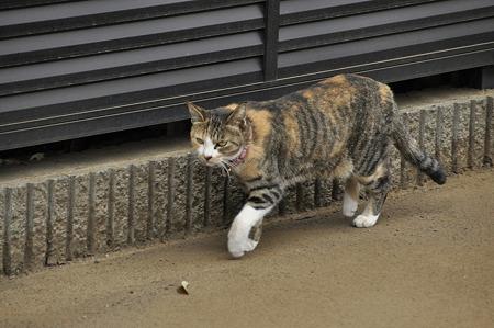 散歩道のネコ