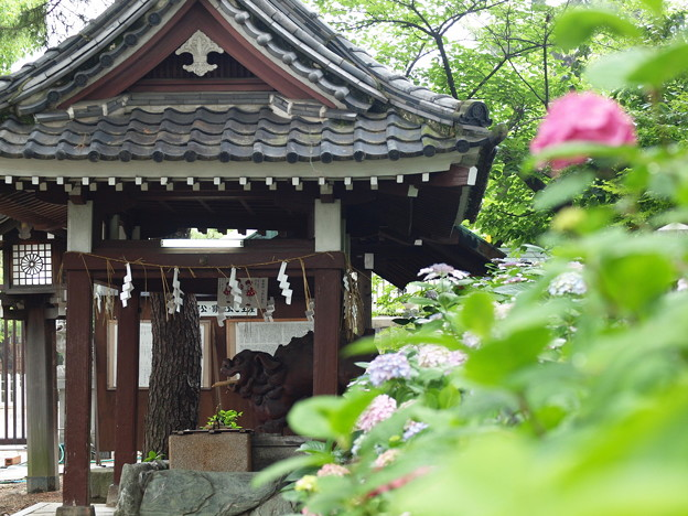 Photos: 阿倍野神社で
