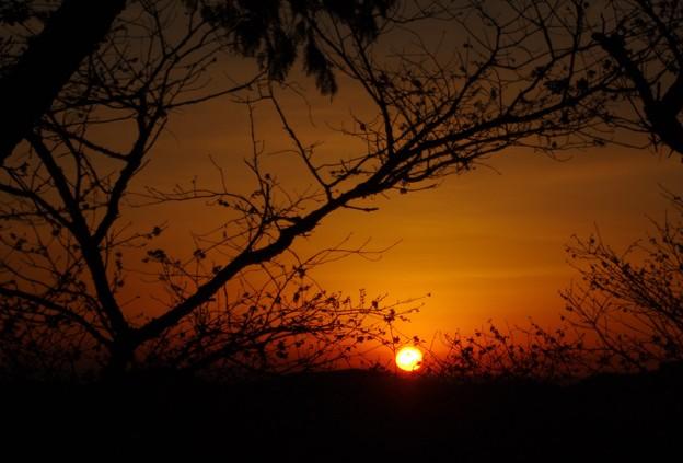 写真: 今日の日の出