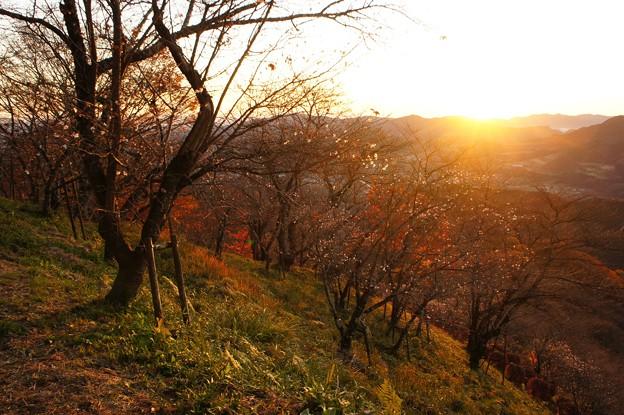 写真: 日の出のあとに