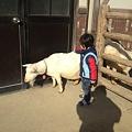東山動植物園_129:ヤギ