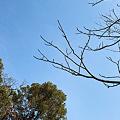 Photos: Tree02222012dp2-03