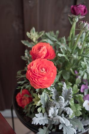 flower03242012dp2-01