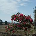 Photos: flower03292012dp2-01