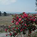 Photos: flower03292012dp2-02