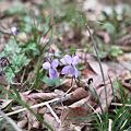 Photos: Flower04092012dp2-02