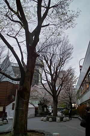 Trees04112012dp1