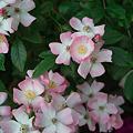Photos: flower06112011dp2-05