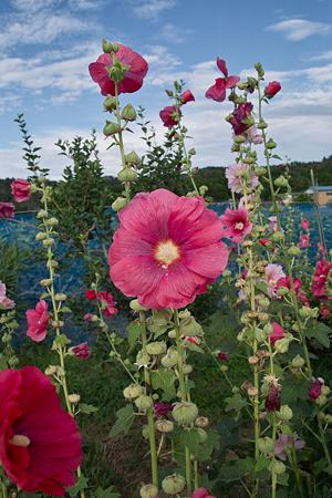 Flower07092011sd15-04