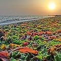 渚のベジタリアン
