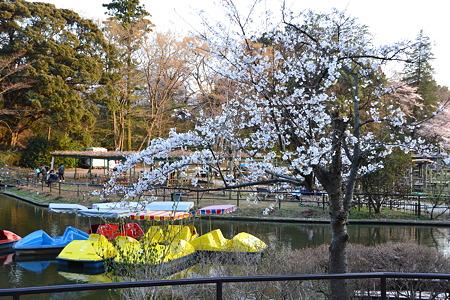 池と桜@清水公園[4/8]