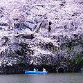 写真: お花見ボート 03