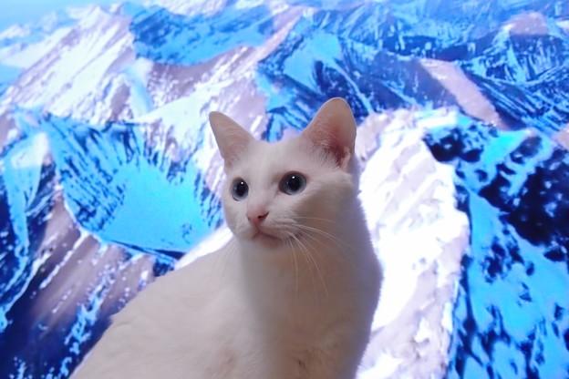 写真: 雪山に生きる