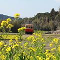 春~小湊鉄道~6