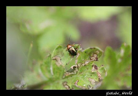 変な虫(2)