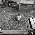火星猫ひとり・・・