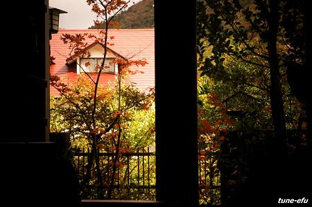 窓の外の秋