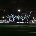 Photos: 榴ヶ岡公園。仙台市内はいつ...