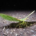 写真: yamanao999_insect2011_339