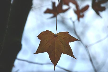 冬の木の葉…