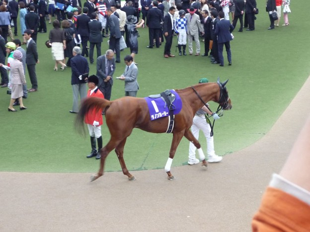 2012安田記念 ダノンヨーヨー