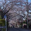 Photos: 2012桜道(横浜市港南区)その5