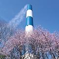 桜と煙突(4/10の様子)その1