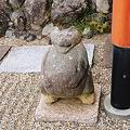 写真: 2012年01月09日_DSC_0503不空院の狸さん