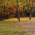 相模湖の紅葉;Nov.2011