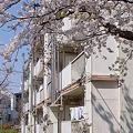 Photos: 県営万騎が原アパート