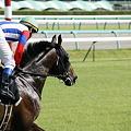 写真: 中山9R シャイニンアーサー 返し馬2