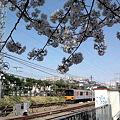 写真: 桜と東武50050