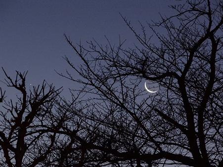 夜明け前の三ヶ月と木星