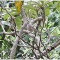 Photos: びわの木にとまっていた鳥