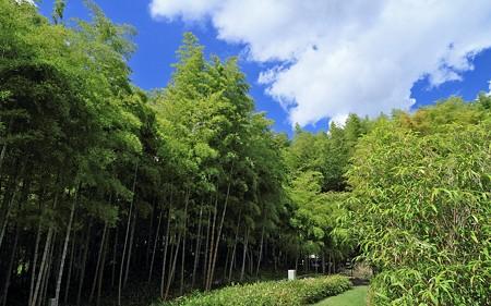 京都市洛西竹林公園024