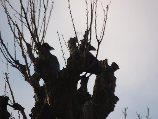 Photos: 東京の野鳥