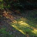 Morning Light 11-20-11