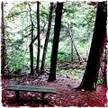 Hilly Bench