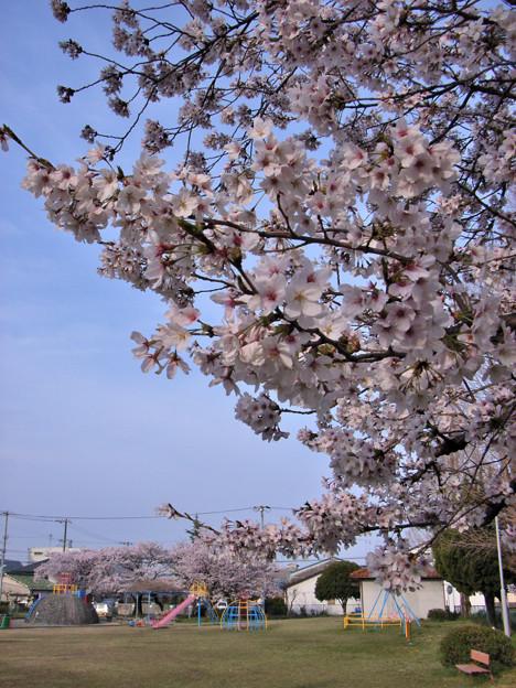 春の陽気 (7) 2012年 4月