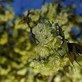 写真: 左近の桜2