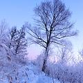 朝日と樹氷