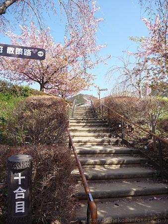 120329-松田山 河津桜 (76)
