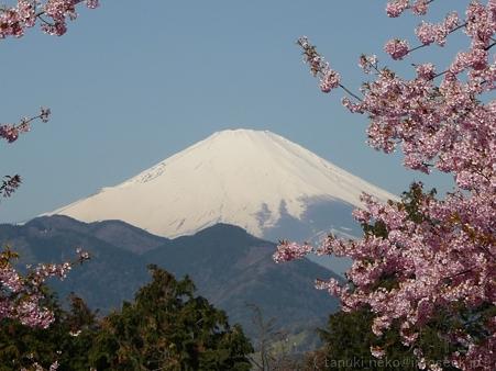 120329-松田山から富士山 (2)