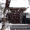 Photos: 居士林2-20120229