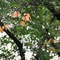 平和公園・紅葉01-11.09.22