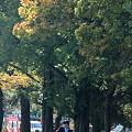 合浦公園・紅葉と遊園地01-11.10.19