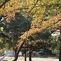 合浦公園・紅葉と遊園地02-11.10.19